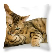 Bengal Brown Spotted Tabby Throw Pillow