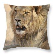 120118p040 Throw Pillow