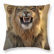 120118p047 Throw Pillow