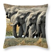 120118p051 Throw Pillow