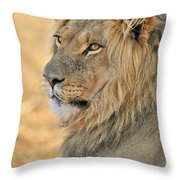 120118p092 Throw Pillow