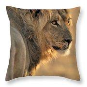 120118p093 Throw Pillow