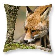 120118p195 Throw Pillow