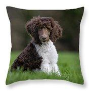 120401p288 Throw Pillow
