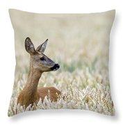 120425p010 Throw Pillow