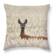 120425p012 Throw Pillow