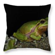 120520p059 Throw Pillow