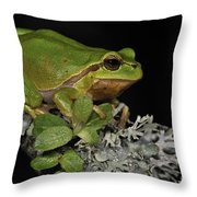 120520p062 Throw Pillow