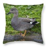 120520p324 Throw Pillow