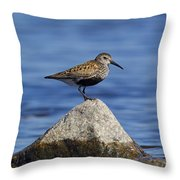 121213p019 Throw Pillow