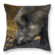 121213p269 Throw Pillow