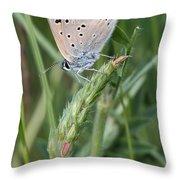 13 Balkan Copper Butterfly Throw Pillow