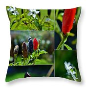 Red Chilli Pepper Throw Pillow