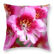Schizanthus From The Hit Parade Mix Throw Pillow