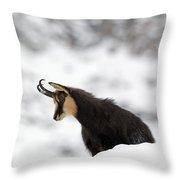 130201p229 Throw Pillow