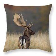 130201p288 Throw Pillow