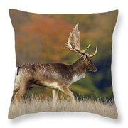 130201p289 Throw Pillow