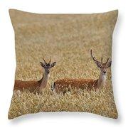 130201p299 Throw Pillow
