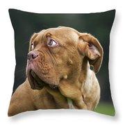 130318p080 Throw Pillow