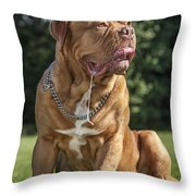 130918p005 Throw Pillow