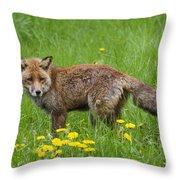 131018p150 Throw Pillow