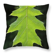 131114p196 Throw Pillow