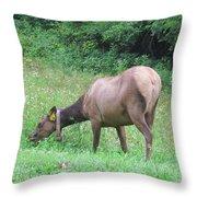 138 Throw Pillow
