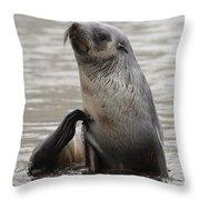 Antarctic Fur Seal Throw Pillow