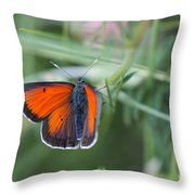 14 Balkan Copper Butterfly Throw Pillow