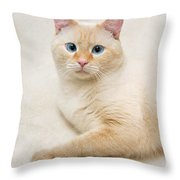 Flame Point Siamese Cat Throw Pillow