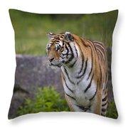 Siberian Tiger, China Throw Pillow