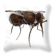 Tsetse Fly Throw Pillow