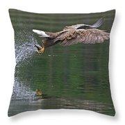 White-tailed Sea Eagle In Norway Throw Pillow