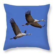 140314p062 Throw Pillow
