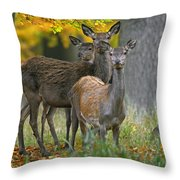 140314p099 Throw Pillow
