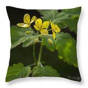 140420p133 Throw Pillow