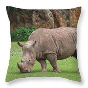 140420p172 Throw Pillow