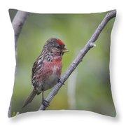 Common Redpoll Throw Pillow