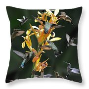 15 Hummingbirds Throw Pillow