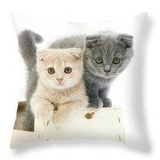 Scottish Fold Bleu Throw Pillow