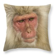 Snow Monkey, Japan Throw Pillow