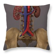 The Renal System Throw Pillow