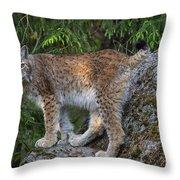 150112p328 Throw Pillow