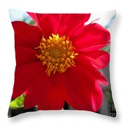 Dahlia From The Showpiece Mix Throw Pillow