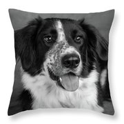 Portrait Of A Border Collie Mix Dog Throw Pillow