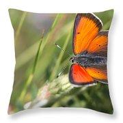 17 Balkan Copper Butterfly Throw Pillow
