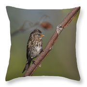 Common Redpoll Throw Pillow