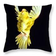 Perruche Ondulee Melopsittacus Undulatus Throw Pillow