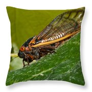 17 Year Cicada 3 Throw Pillow by Lara Ellis