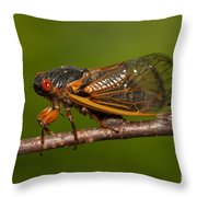 17-year Periodical Cicada I Throw Pillow